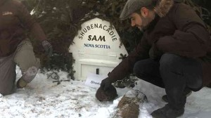 shubenacadie-sam-groundhog-day-2015