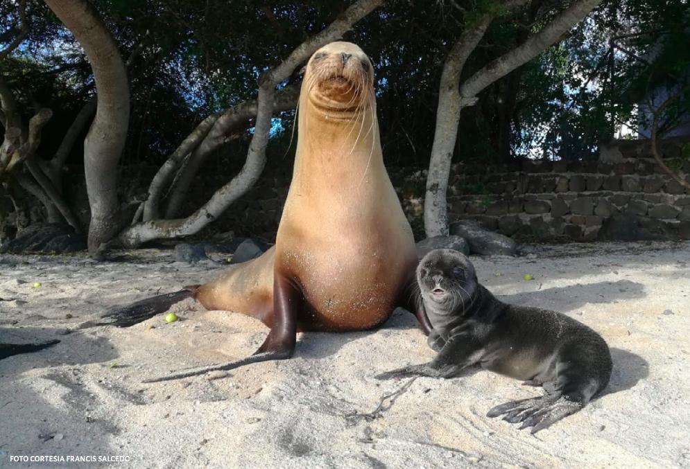 CHC pide a gobierno de Canadá acciones para proteger las Islas Galápagos